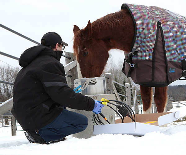 Contractor installing self-regulating heating cable to livestock drinking bowl at farm in winter
